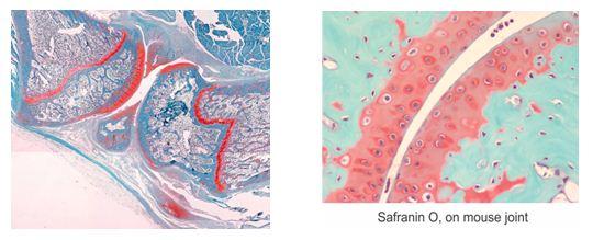 Histology1115