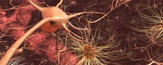 Neuralfiels