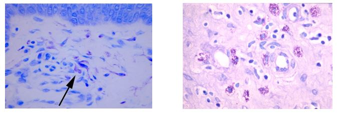 histology-April