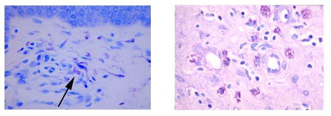 Histology-0418