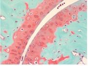 Histology-0518
